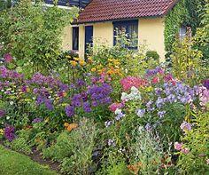 Bildergalerie - Mein schöner Garten