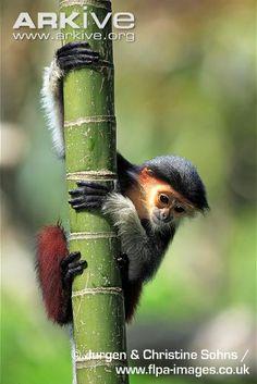 monkey on bamboo