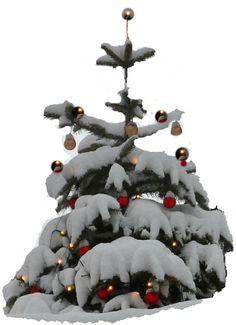 """Romantisch ist's in der Weihnachtszeit, wenn der Schnee die Landschaft verzaubert. Christbäume außen haben dann ihren großen Auftritt, wie auf diesem Foto von wellSi-made. Foto und kurzes Gedicht erzählen kompkakt von Weihnachten. Auf """"Gedichte, Geschichten bei Buch-Juwel. Frei aufrufbar.  http://buchjuwel.blogspot.de/2017/12/weihnacht-ists.html"""