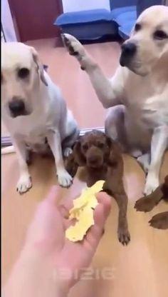 Funny Animal Jokes, Funny Animal Photos, Funny Dog Memes, Funny Video Memes, Funny Animal Videos, Cute Funny Animals, Funny Dogs, Animals And Pets, Baby Animals