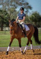 2002 Oldenburg mare by Don Gregory out of a Rohdiamant mare. Second/Third Level Dressage mare. Scored in 70's at First level, 60's at Second and Third Level. Quiet at shows, well mannered. Good on trails and beach. Easy to handle. $26,000