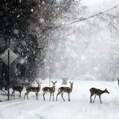 Carrboro, NC Feb snow 2014©RVPHOTO.