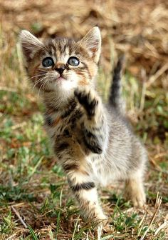 adorable kitten Via Suzanne Bouron on Flickr