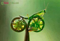Divertida imagen de una mantis religiosa sobre un tallo, con una semejanza curiosa.