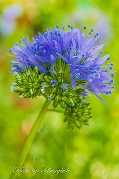 #bluethimble #gardenbythebay #flowerdome
