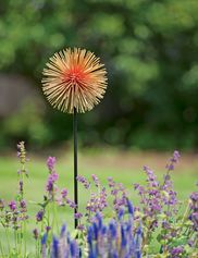Allium Sunburst Stake, Medium