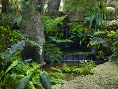 Garden in Florida landscaped by Raymond Jungles Inc