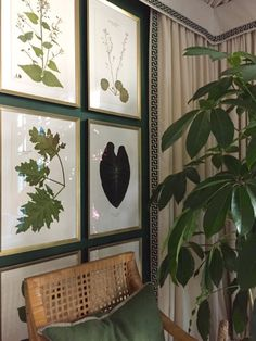 Countdown to the Idea House: Meet the Architect!  Blackwell Botanicals pressed specimens.