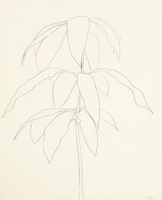 Ellsworth Kelly Mango graphite on paper 28½ x 22½ in. (72.4 x 57.2 cm.) Drawn in 1959.