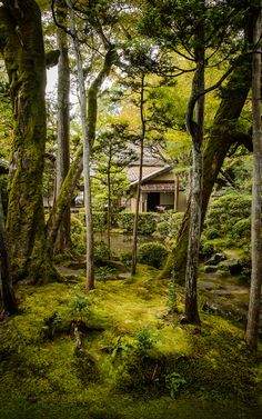 Private Garden at the Honen'in Temple (法然院), Kyoto Japan. Image credit Jeffrey Friedl. #Kyoto