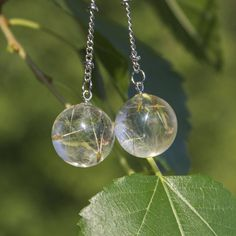 long earrings chains. Incredible dangle earrings made of crystal eco-resin with real dandelion.