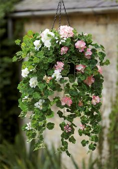 Find out why we've extended our range of beautiful faux hanging baskets this season