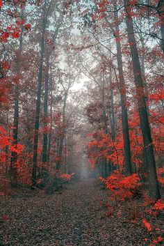 Fall in forest, Hungary