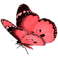 butterfly ❤ liked on Polyvore featuring butterflies, fillers, animals, backgrounds and decor