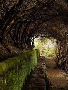 How do I want to walk through this tree tunnel and be met by some magical creature, of the fairy tale variety, at the end.Tree Tunnel, Maderia, Portugal by Dan Knowle Beautiful World, Beautiful Places, Beautiful Gardens, Beautiful Pictures, Tree Tunnel, The Secret Garden, Secret Gardens, Pathways, Belle Photo