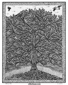 Meeting Tree by Eli Helman, 8x10, Micron pen ink on paper
