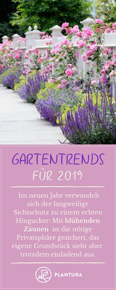 Gartentrends 2019 – Blühende Zäune: Graue Mauern und kahle Zäune sind Vergang… Garden trends 2019 – flowering fences: gray walls and bare fences are a thing of the past. In the new year, a colorful bloom of flowers enchants our… Continue Reading → Backyard Fences, Backyard Landscaping, Unique Garden, Flower Garden Design, Diy Garden Projects, Plantation, Begonia, Grey Walls, Horticulture