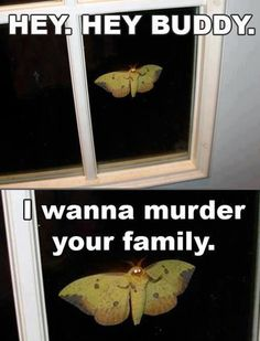 Funny pictures about Friendly Moth Is Here. Oh, and cool pics about Friendly Moth Is Here. Also, Friendly Moth Is Here photos. Creepypasta, Animal Memes, Funny Animals, Animal Funnies, The Meta Picture, Just For Laughs, Laugh Out Loud, The Funny, I Laughed
