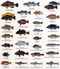 Resultados de la Búsqueda de imágenes de Google de http://2.bp.blogspot.com/_PvvCgKiD82k/TOmrpI2T0tI/AAAAAAAAAD4/-CUNpLn_7tw/s1600/img_39131.4338078704_peces1.jpg