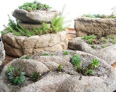 say it with Cement: Hypertufa Sedum Containers