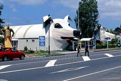 Tourist shops at Tirau depicting giant Sheep (right) and sheep dog (left), Tirau, South Waikato District, Waikato Region, New Zealand (NZ). New Zealand Image, Sheep, Stock Photos, Watches, Dogs, Wristwatches, Pet Dogs, Clocks, Doggies