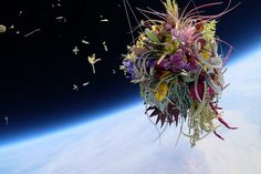 Makoto Azuma has taken his latest floral art project called 'Exbiotanica' to a crazy place… space