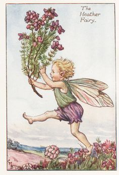 Flower Fairies: The HEATHER FAIRY Vintage Print c1930 by Cicely Mary Barker