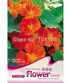 FD1659 Garden Nasturtium Seed Flower Seed Tropaeolun Seeds ~1 Pack 6 Seeds~