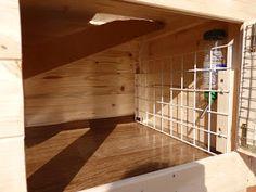 Nahrať - YouTube Guinea Pig House, Guinea Pigs, Bunk Beds, Stairs, Youtube, Furniture, Home Decor, Ladders, Homemade Home Decor