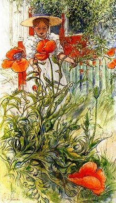 Poppies painting by Carl Larsson