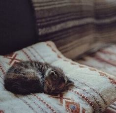 Image about cute in gatos by Itzy on We Heart It Crazy Cat Lady, Crazy Cats, I Love Cats, Cute Cats, Nanu Nana, Belle Photo, Cats And Kittens, Fur Babies, Dog Cat