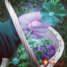 Toto by mala na jar poznať každá žena po 40-tke: Tieto listy máte na záhrade úplne zdarma, ale ich účinky sú ohromné - len zalejte vodou! Detox, Herbs, Ale, Plants, Food, Eten, Herb, Ales, Planters