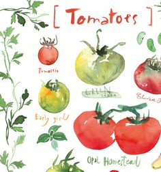 Tomato poster Kitchen art print Red and green от lucileskitchen