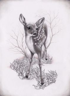 279 Best FAWN SKETCHES images | Sketches, Art, Animals