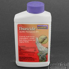 Organic way to kill Caterpillars and not harm other good bugs.  Thuricide - Bacillus Thuringiensis (BT)