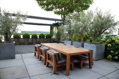 Olive trees in large galvanised containers Outdoor Areas, Outdoor Seating, Outdoor Rooms, Outdoor Dining, Outdoor Decor, Dining Area, Modern Landscaping, Backyard Landscaping, Garden Furniture