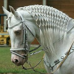 Horses And Dogs, Cute Horses, Pretty Horses, Wild Horses, Show Horses, Horse Mane Braids, Horse Braiding, Most Beautiful Horses, Animals Beautiful