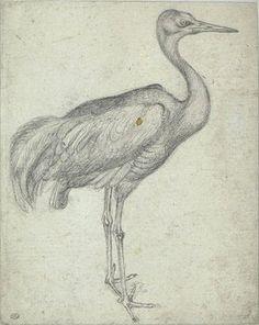 Pisanello, A Crane, mid 15C. Codex Vallardi 2449, Louvre, Paris.