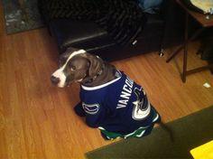 Thanks to Twitter follower @peckr10 for sharing Wyatt's love for the #Canucks. #hockeypets