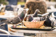 Ste majiteľom rodinného domu, chaty alebo malej záhradky a robia vám vrásky na tvári rôzne druhy vtákov?  Možno ste si doteraz mysleli, že tento problém sa dá vyriešiť len ich mechanickým plašením, rozmiestnením plechoviek, tašiek alebo umiestnením strašiaka. V dnešnej dobe máme k dispozícii aj iné riešenie nazývané plašič vtákov. Bird, Animals, Animales, Animaux, Birds, Animal, Animais