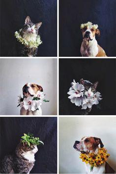 Pets wearing flowers.