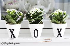 Decorating with miniature succulents is such fun and so easy. Just stick them in some homemade numbered pots and line them up on a ledge: instant beauty. www.songbirdblog.com