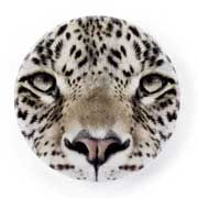 Catseye Leopard Mirror £2.85