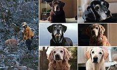 During the chaos of the 9/11 attacks nearly 100 loyal search and rescue dogs and their brave owners scoured Ground Zero for survivors. Just 12 survive and have had a moving tribute made to them.