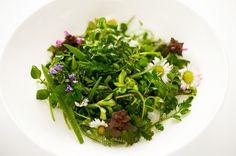 Blomstersalat med urter