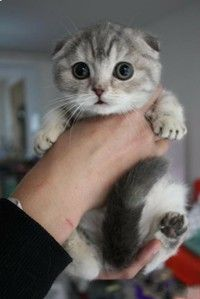 i might just like this cat bc it's cute!