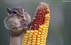 - 15 chipmunks who know that nuts not much happens - Superpinportal