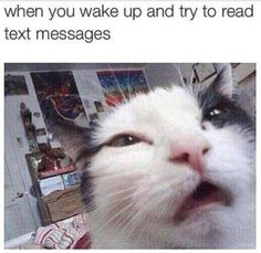 20 Hilarious Animal Pictures That Will Make You LOL Have you laughed today? Cute Cat Memes, Funny Animal Memes, Cute Funny Animals, Funny Animal Pictures, Funny Cats, Funny Shit, Stupid Funny Memes, Funny Relatable Memes, Hilarious
