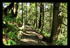 olympia forest - Google Search
