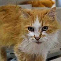 Pet Card Kitten Adoption Cat Adoption Pet Adoption